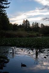DSCF0693 (jojotaikoyaro) Tags: zenpukuji suginami tokyo japan landscape nature fujifilm x100f sunset