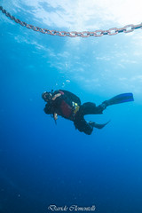 IMG_1479 (davide.clementelli) Tags: diving dive dives padi immersione immersioni ampportofino portofino liguria friends amici underwater underwaterlife sottacqua