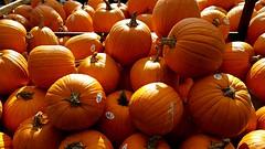 Back of the Pumpkin Truck (Studio d'Xavier) Tags: backofthepumpkintruck pumpkins harvest orange