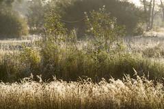 _IMG2406 (Henk de Regt) Tags: the netherlands gelderland natuur nature landscape grass bos forest trees zonsopkomst sunset sundown zonsondergang swamp nederland veluwe landschap gras water bomen moeras