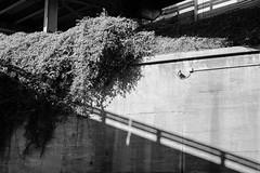 7D-6563 (msantosviola) Tags: bnw bw blackandwhite monochromatic monochrome street photography symmetry lines shadows natural light