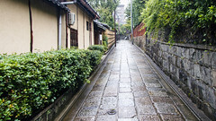 Empty Road in Kyoto, Japan (Synghan) Tags: empty road kyoto japan street avenue pavement stone trail green plants walk walking ahead going photography horizontal outdoor colourimage fragility freshness nopeople foregroundfocus adjustment interesting awe wonder tradition oldstyle rainy wet gloomy afterrain tranquility peace frontview forward kodaiji artificial canon eos80d 80d sigma 1770mm f284 dc macro lens 고다이지 일본 교토 길 보도 pedestrian