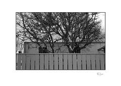 Yard (radspix) Tags: neoca sv 45mm zunow f28 kentmere 100 pmk pyro