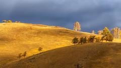 Осенние контрасты #maksileni, #Максименко_Леонид, #Leonid_Maksimenko, #своифото, #пейзаж, #природа, #утро, #рассвет, #дерево, #натура, #восход, #sunrise, #nature, #tree, #Landscape, #sun, #туман, #лучи, #foggy, #природа, #небо, #небоголубое, #сониальфа, # (ЛеонидМаксименко) Tags: autumn сониа6000 maksileni leonidmaksimenko урал natgeoru foggy nature небо природа натура дерево etonashural sun рассвет своифото sunrise ural natgeorussia сониальфа пейзаж восход sonyalpha небоголубое утро sonya6000 лучи tree landscape natgeoyourshot туман максименколеонид