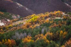 Autumn in The Rhodopes... (Dimitar Balyamski) Tags: nature landscape autumn mood mountains rhodopes balkans trees