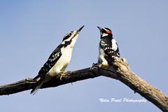 IMG_7970 (nitinpatel2) Tags: bird nature nitinpatel