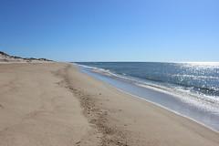 IMG_2121 (watchfuleyephoto) Tags: montauk beach ocean sand seal shells landscape vista view atlanticocean waves seagulls
