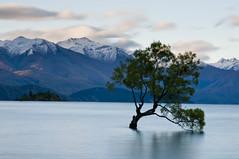 Lake Wanaka - New Zealand (paolo_barbarini) Tags: lake wanaka newzealand landscape tree water nature mountains