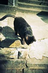 lca55_11 (Ghostwriter D.) Tags: germany saarland saarbrücken city analog lca lomography cat