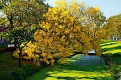 boom (Roel Wijnants) Tags: boom kleur herfst sloot jaargetijde wandelen fietsen denhaag thehague hofstijl haagspraak absolutelythehague lovethehague thisisthehague gebruiksvoorwaardenlezen cityilove groen natuur