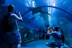 Dubai Aquarium & Underwater Zoo (Piotr Kowalski) Tags: dubai unitedarabemirates emiates city arab travel dubaj zjednoczoneemiratyarabskie wakacje podróże turystyka underwater tunnel zoo aquarium dubaimall