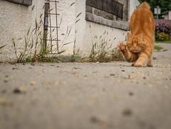 Dude.. (CoolMcFlash) Tags: cat pet animal fujifilm katze haustier tier street strase funny fotografie photography x30