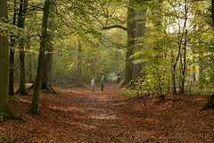 choices, which way are we going today (Johan Moerbeek) Tags: autumn heiloo heilooerbos herfst bos trees bomen ngc
