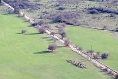peloton groupé (b.four) Tags: mouton pecora sheep flock gregge troupeau lamalle grasse alpesmaritimes
