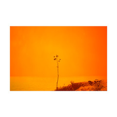 (Max Lindquist) Tags: yellow color portugal europe travel art photography sea ocean water branch leaves plant leaf plants nature seas