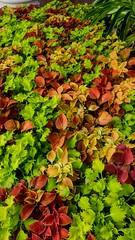 Autumns Garden ! (jlynfriend) Tags: phonephoto lg garden leaves autumn plants afternoon smileonsaturday seasonsflora