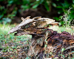 Rotting and Decaying Wood. (SteveCrowhurst 2011) Tags: rotting decaying textures colours light detail