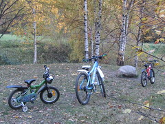 bike family :) (VERUSHKA4) Tags: canon europe russia moscow vue view ville city cityscape park parkkuskovo birchtree trunk bough branch three wheel stone nature october autumn metallicobjects object detail leaves yellow grass brown two four