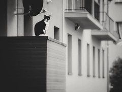 Balcony (wojciechpolewski) Tags: cat kitty kitten blacknwhite blackandwhite bw bnw kedzierzynkozle poland animal nature naturephoto balcony architecture wpolewski