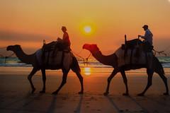 10003510.jpg (KevinAirs) Tags: camels camel kevinairs ocean sunset travel westernaustralia ©kevinairswwwkaozcomau sand sky landscape landscapes beach australia sea jacquihawkins