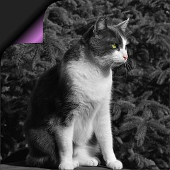 Cat On Guard Duty (Scott 97006) Tags: cat feline sitting perched guard observing staring colors pagecurl cute