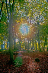Sun through trees (Ghazghul) Tags: eastleigh fair oak bishopstoke stoke park woods hampshire nikon d300s 20mmf28d nikkor