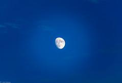 Moon light (brighteyespics) Tags: athensga bluesky georgia nature oconeeforestpark sunflare sunset uga d5300 lake lightroom moon nikon photographer sculpture water athens unitedstates us