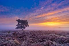 Kleuren + op de Veluwezoom (nldazuu.com) Tags: dauw zonsopkomst natuur sunrise mist gelderland nevel atmosfeer rozendaalseveld veluwezoom sonya7iii benrofh100mii fog landscape landschap arnhem goudenuur