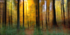 It warms the heart (After-the-Rain) Tags: icm intentionalcameramovement miltonriggwood autumncolour trees woodlandtrust october2018 ©joanthirlaway cumbria