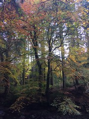 Tollymore Park County Down NI (Lonfunguy) Tags: northernireland outandabout countydown