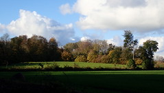 Falling into autumn (Landanna) Tags: fallingintoautumnautumn fall herfst herfstkleuren efterår effterårsfarver coloursofautumn