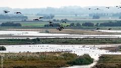 zeeland--1157 (clickraa) Tags: vogelobservatiepost westkapelle deich walcheren domburg vogelschutzgebiet