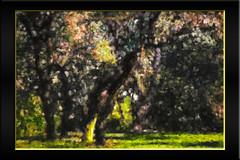 Arboleda (seguicollar) Tags: imagencreativa photomanipulación art arte artecreativo artedigital virginiaseguí árboles arboleda tronco ramas hojas otoño