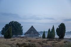 Lüneburger Heide (Gret B.) Tags: morgen morgens morgennebel morgendämmerung morning grau trüb landschaft lüneburgerheide nebel