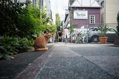 猫 (fumi*23) Tags: ilce7rm3 sony street samyang katze gato neko cat chat a7r3 animal samyangaf24mmf28fe alley ねこ 猫 ソニー サムヤン 24mm