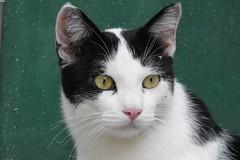 Fufi (ddgp) Tags: cat friend love chat