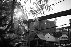 (aldenfrautschy) Tags: chicago illinois unitedstates us fall outside blackandwhite canon city cityscape big noir neo bench flowers leaves train tracks sunset skyscraper