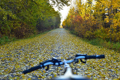 Falling leaves (drafiei1) Tags: fall fallcolors fall2018 autumn autumncolors leaves bikeroute biking nikon walk