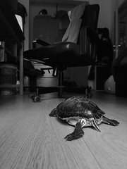 (McPhotography_) Tags: animal life picture love turtle nature sky dreams travelling balck colours joy frienship pretty classic cool sadness happiness trees priority photo queue portrait sunshine sunrise light lights