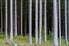 from light to dark (blattboldt) Tags: europe germany harz woods forrest trees green lightandshadow dark sonyalpha7rmiii sonyilce7rm3 zeissloxia2485sonnatt specialthankstochristophecasenavefromzeissforhispersonalinvolvementinthedevelopmentoftheloxialenseline loxia2485 emount nature