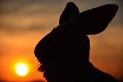 ...the rabbit at the sunset...   😂😂 (biom73) Tags: nikon tramonto coniglio sun rabbit landscape sunset