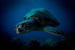 IMG_7435 (Gil Xavier) Tags: underwater scuba philippines canon fantasea g7xmk2 cebu moalbal turtlebay