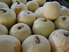 DSC07705 (kurmanstaff) Tags: kurmanphotography halloween dusselfarm kentohhalloween halloween2018 pumpkinsandsquash outdoorfestival