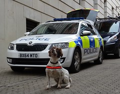 PD Mickey (West Midlands Police),  Birmingham City Centre. (Vinnyman1) Tags: west midlands police pd mickey dog unit emergency services service rescue 999 birmingham england uk united kingdom gb great britain operation pelkin prime minister conservative party conference tory tories 2018