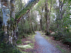 Rakaitane Walk (treegrow) Tags: newzealand moana lakebrunner nature lifeonearth