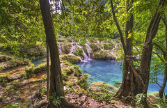 Paradiso (Fil.ippo) Tags: semucchampey guatemala naturalmonument attraction tourism paradise heaven water pool turquoise bridge landscape nature tree green forest filippo filippobianchi d610 nikon travel lanquin