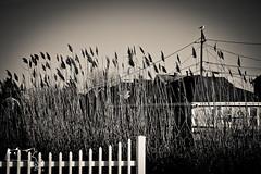 2012 christmas-87 (alanschererphotographer) Tags: boats beach capecod kids people birds boston