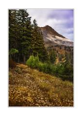 Mt Hood Meadows (Krasne oci) Tags: nature forest mountains trees outdoors hiking evabartos artphotography texturedphoto painterly