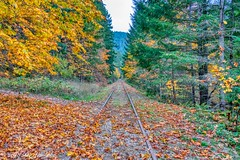 Autumn Series (Per@vicbcca) Tags: aurora19 britishcolumbia vancouverisland canada sony ilce7m2 a7ii fe24105mmf4goss autumn fall enrailway maple leaves