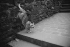 L1020307_M35F14_L_Germany_Cat (OPTIK AXIS) Tags: summiluxm11435 blackandwhite garylevel monochromatic blackandwhitefilm ライカmレンズ 単焦点レンズ ズミルックス leica leicacamera leicam9p germany